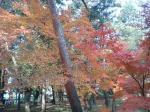こちらも鮮やかな紅葉です☆