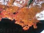 見上げる紅葉☆