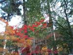 水路閣と彩りの紅葉♪