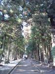 200メートルの杉並木♪
