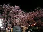 夜桜もキレイでした♪