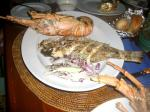 robstar1