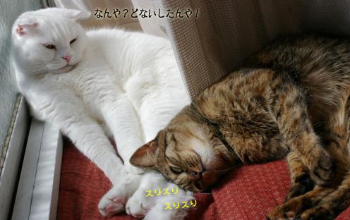 kirara surisuriのコピー