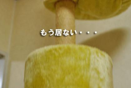 isaniのコピー