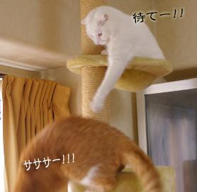 逃げるぷぷコピー