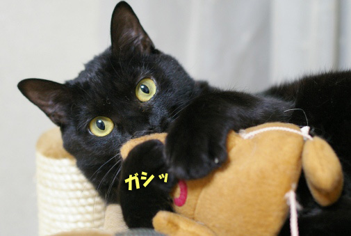 くーちゃんのコピー