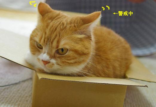 箱のコピー