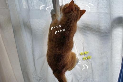 noboruのコピー