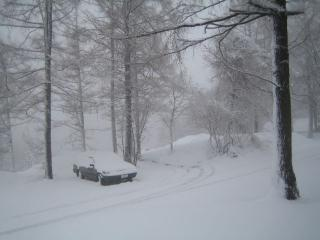 雪が降ってります。