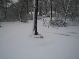 雪が積もっていました。