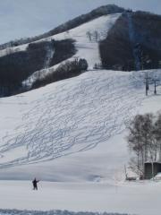 新雪にシュプール