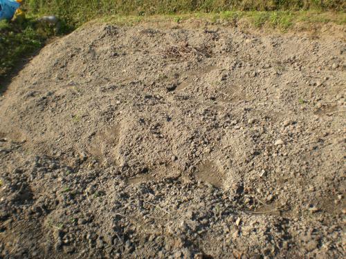 花崗岩の土壌2