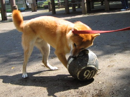 he-loves-ball.jpg