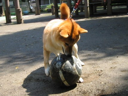 he-loves-ball1.jpg