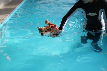 mame-swims3.jpg