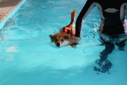 mame-swims4.jpg