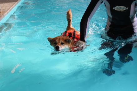 mame-swims5.jpg