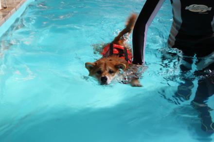 mame-swims6.jpg