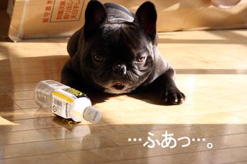 2007-12-05 あくび1