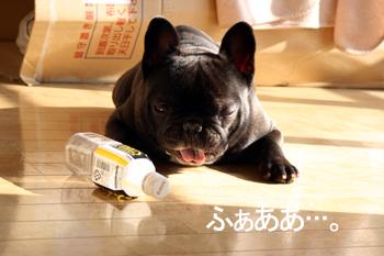 2007-12-05 あくび2