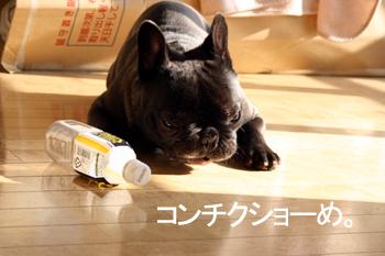 2007-12-05 あくび4
