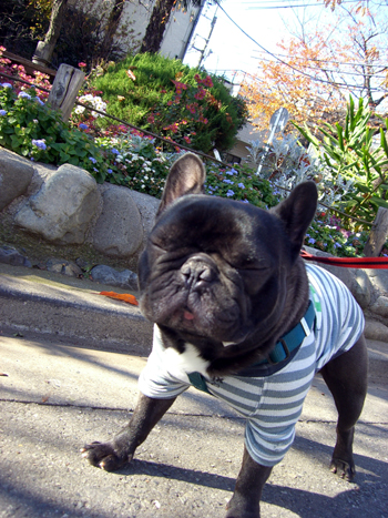 2007-12-09 犬禁止?4