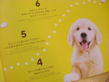 2008-02-15 犬と私の10の約束2