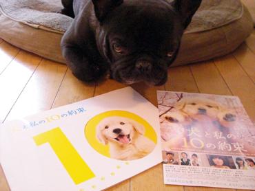 2008-02-15 犬と私の10の約束3