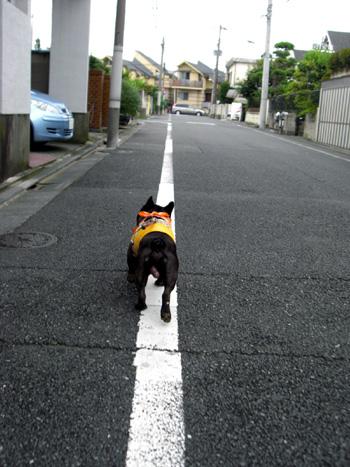 2008-08-28 暑いけど散歩3