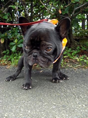2008-08-28 暑いけど散歩4