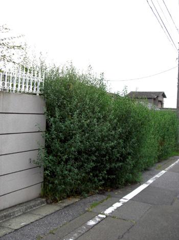2008-08-28 暑いけど散歩5