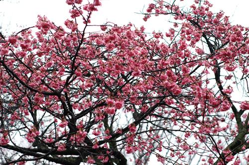 春はまだか その2