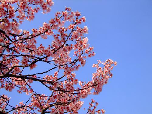 もう少しで春