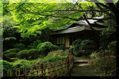 日本庭園の茶室