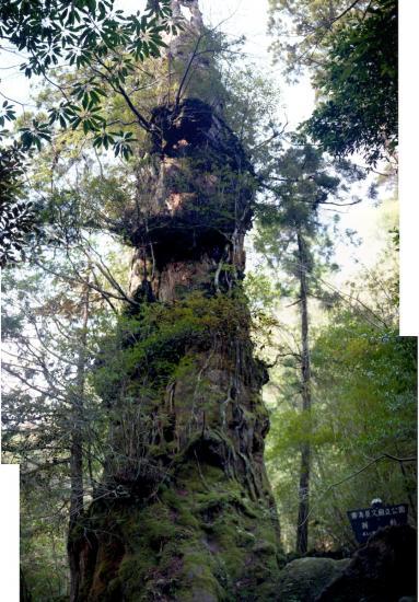 20080602-翁杉