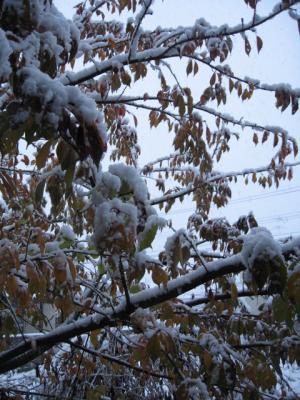IMG_3137_convert_20081122021914 初雪