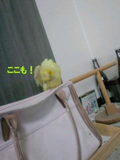 CA3C0271.jpg