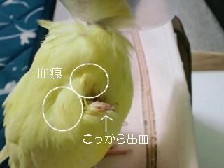 CA3C0989.jpg
