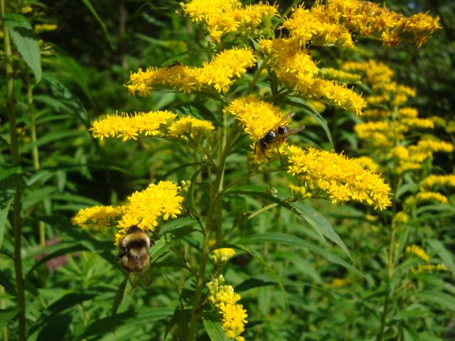 黄色い花と