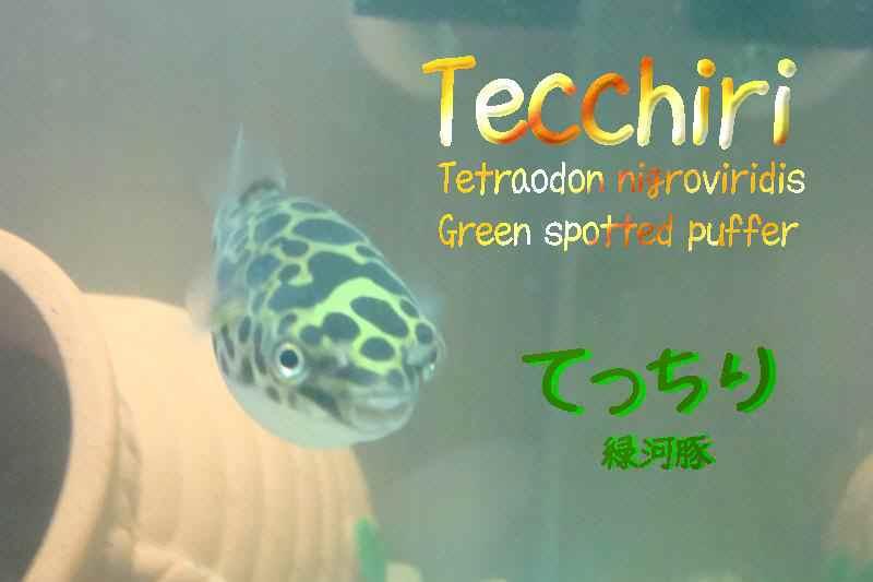 tc11-5-12