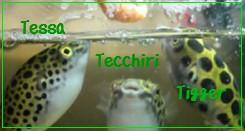tstcti-B