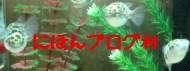 tstcti12-12B