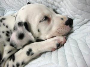 ちゅちゅの寝顔