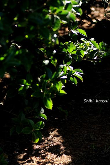 透過光&木漏れ日&反射光