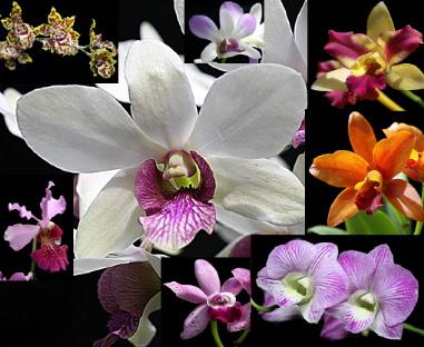 orchids1.jpg