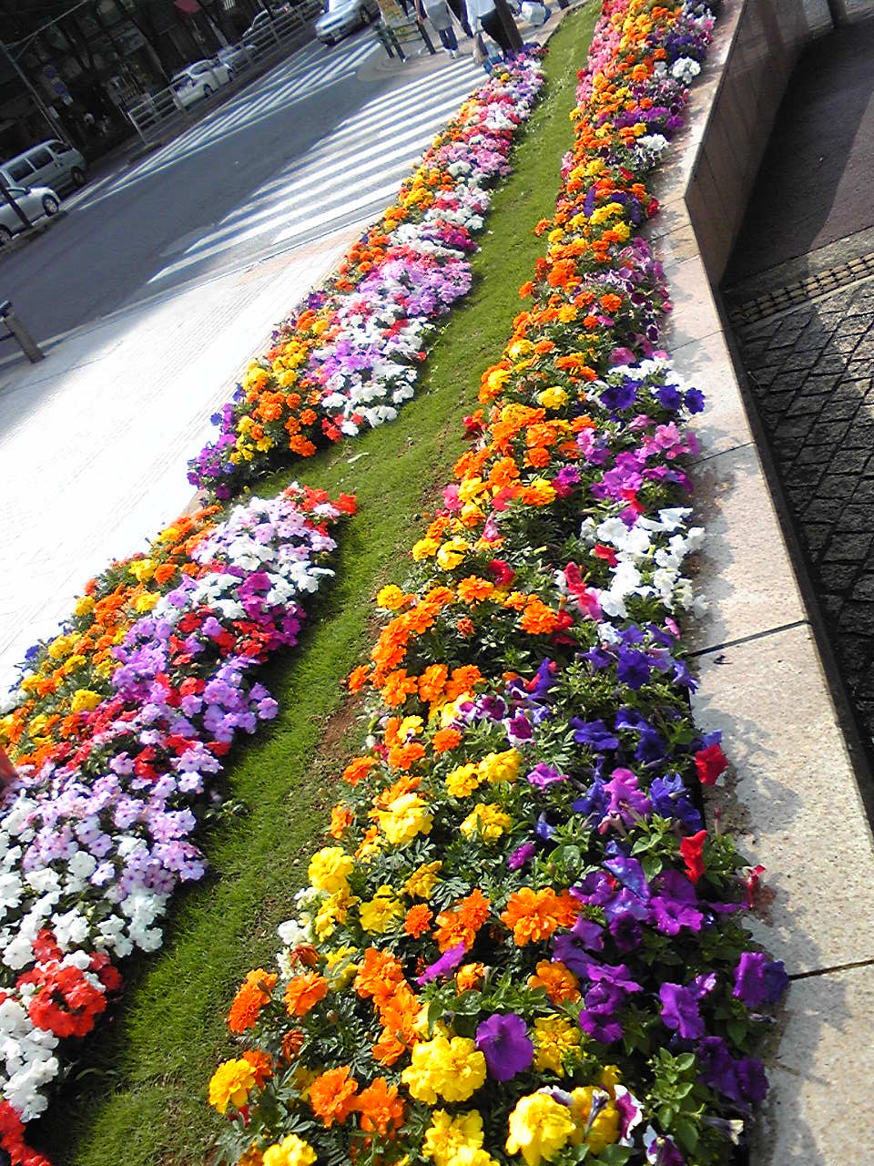 flowers of hopes