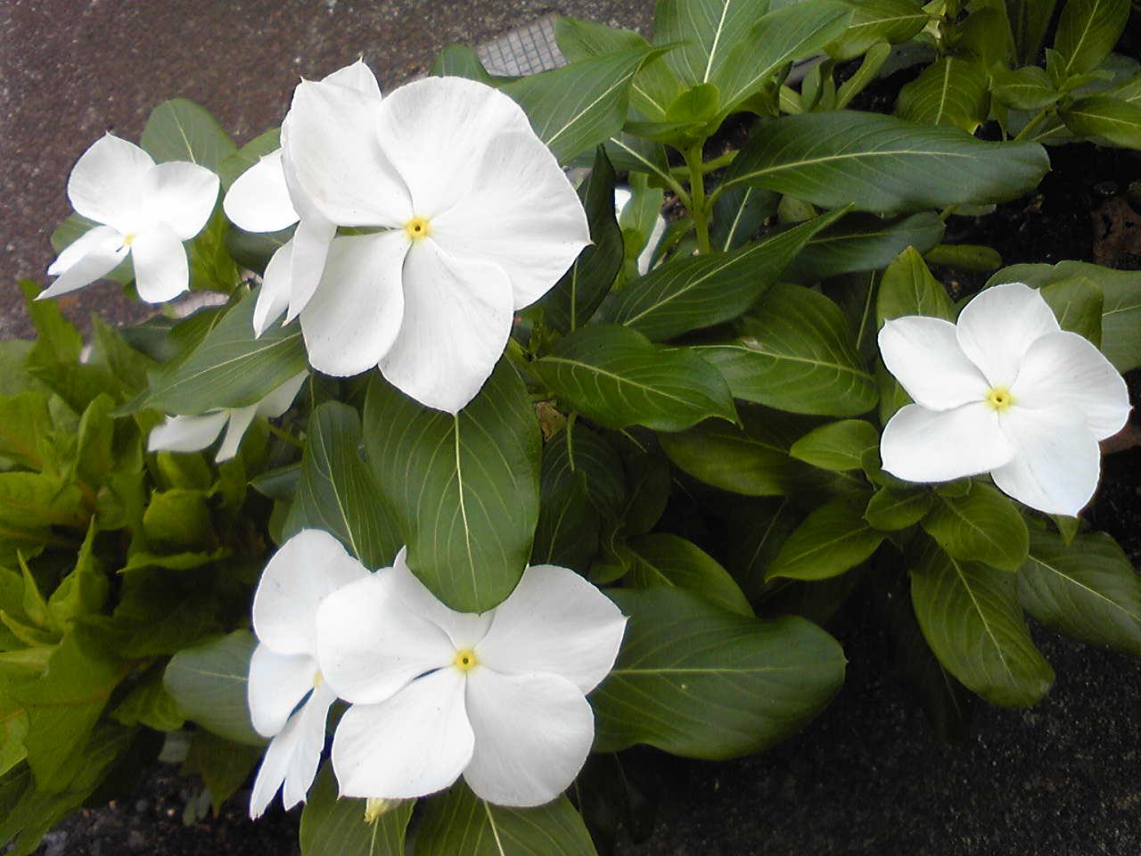 Pure white