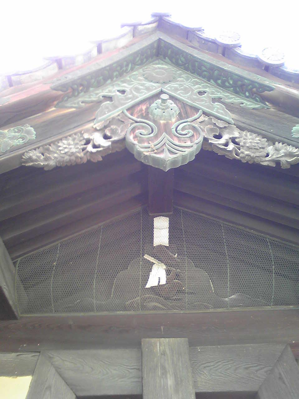 sarugatsuji kimon fuji