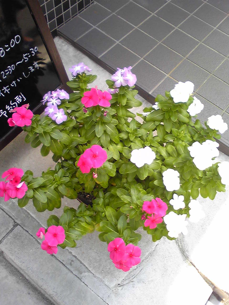 randam flowers