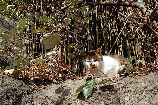 葉山のほくろ母さんと呼ばれていた猫